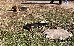 В Кривом Роге неизвестные массово травят собак, горожане вычисляют преступников