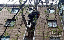 Пожарные помогли криворожанке спасти ее кота