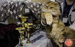 В субботу криворожан ждет Международная выставка котов и джазовый концерт «Jazz Days in Kryvbass»