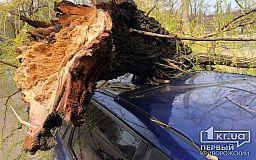 Дерево, которое рухнуло на 2 авто, не было сухим, - управитель
