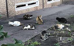 Криворожанин предложил чиновникам создать в городе кладбище для домашних животных