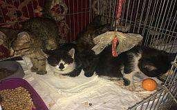 Неизвестные выбросили котят в заклеенных коробках, криворожским волонтерам нужна помощь, чтобы спасти животных