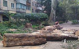 В Кривом Роге коммунальщики убрали дерево, рухнувшее на балкон жилой квартиры