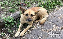 Жителя Днепра, который избивал и пытался зарезать собаку на глазах у детей, могут посадить на три года