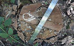 В Кривом Роге члены ОПГ продавали незаконно вырубленные деревья
