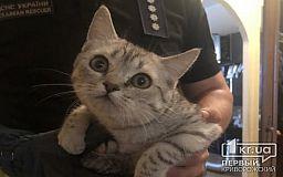 В Днепре пожарные спасли кота, который застрял в вентиляционной шахте