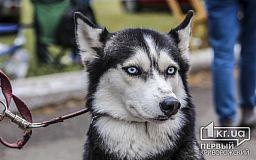 На криворожском стадионе более 500 собак участвуют во Всеукраинской выставке (ОБНОВЛЕНО)