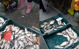 В Кривом Роге оштрафовали женщину, которая незаконно продавала рыбу
