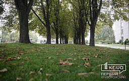 Где еще в Кривом Роге появится новый газон