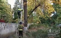 Криворожские пожарные спасли кота, который застрял на дереве