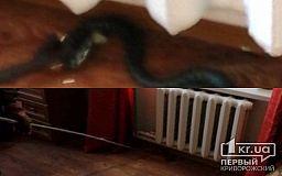 В Криворожском районе люди обнаружили змею в доме