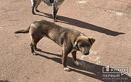 В Кривом Роге три дня будут подсчитывать бродячих собак, горожан приглашают стать волонтерами