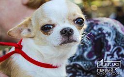 Криворожане могут стерилизовать домашних кошек и собак в Центре обращения с животными