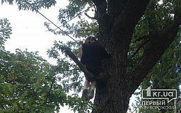 Криворожские спасатели сняли ребёнка с дерева