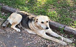В Кривом Роге волонтеры насчитали более 5 тысяч бродячих собак