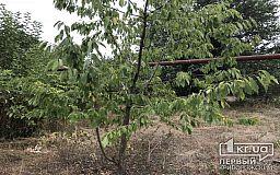 Криворожанин нашел на огороде боеприпасы