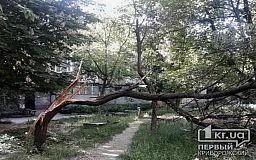 Во дворе одного из домов падают деревья, поломанные крышки канализационного люка, а управляющая компания бездействует, - криворожане