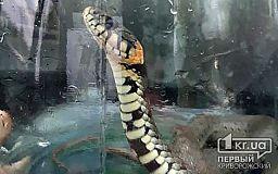 Змея заползла в подвал детсада в Криворожском районе
