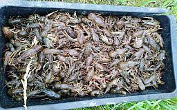 В Криворожском районе задержали мужчин, выловивших раков и рыбы на 26 тысяч гривен