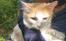 Видео спасения кота Яши криворожским экстремалом