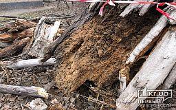 В Кривом Роге дерево рухнуло, оборвало электропровода и загорелось