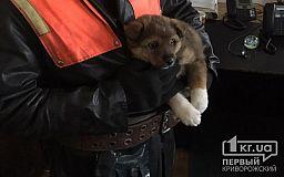Криворожские пожарные спасли щенка, который застрял на мосту