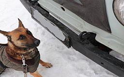 В Кривом Роге служебная собака Дора нашла в автобусе и легковушке оружие