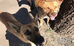 Внимание! В Кривом Роге неизвестные травят собак