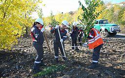 Тысяча новых деревьев: Ингулецкий ГОК выполняет рекультивацию отвала
