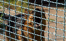 В Кривом Роге породистая собака и дворняга оказались переносчиками опасного заболевания