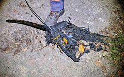 Существо страшнее «чупакабры» криворожские коммунальщики достали из канализационного коллектора
