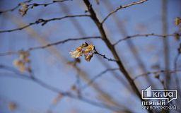 В минусовую погоду в криворожском парке зацвели молодые фруктовые деревья