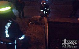 Собаку, которая упала в неработающий фонтан, спасли криворожские пожарные