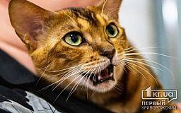 Эльфы и абиссины: выставка кошек в Кривом Роге