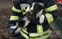 Пожарные спасли щенка