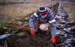 В 2020 году Северный ГОК высадил на промышленных площадках более 20 тысяч растений