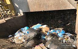 На уборку случайного мусора в одном из районов Кривого Рога планируют потратить 652 тысячи гривен