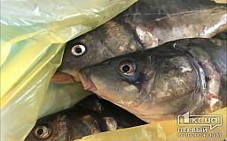 З 1 квітня на Дніпропетровщині забороняють вилов риби