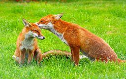 Чтобы защитить редкие виды животных: наступает «сезон тишины» в лесах
