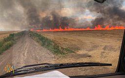 В селе под Кривым Рогом горели 4 гектара поля
