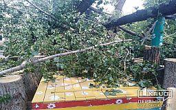 Жители Кривого Рога жалуются, что никто не убирает обвалившиеся деревья