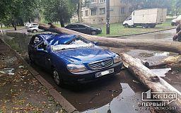 Сухой ствол дерева в Кривом Роге упал на машину