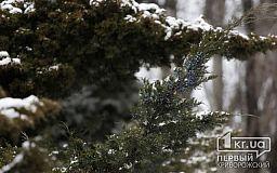 Погода в Кривом Роге на 9 февраля
