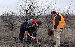 На Северном ГОКе продолжают работы по озеленению санитарно-защитной зоны