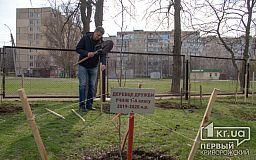 Криворізькі школярі з батьками висадили понад 100 дерев