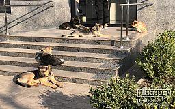 В Кривом Роге подсчитают бродячих собак
