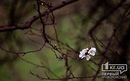 Погода в Кривом Роге 24 апреля