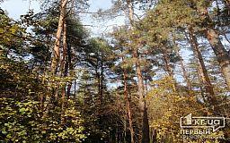 Навіщо в Україні хочуть посадити 1 мільярд дерев