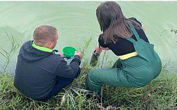В Криворожском районе из-за загрязнения водоема погибла рыба