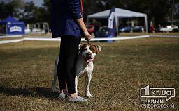 В Кривом Роге состоялась международная выставка собак